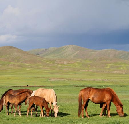 Voyage à cheval dans le parc national Terelj