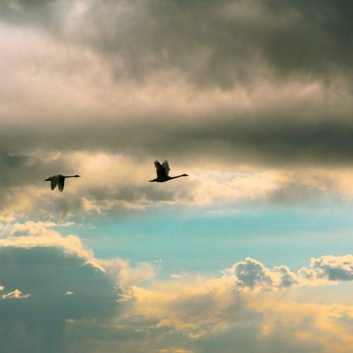30 oiseaux grues ciel